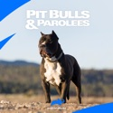 Pit Bulls and Parolees, Season 1 watch, hd download
