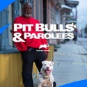 Pit Bulls and Parolees, Season 15 watch, hd download