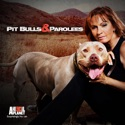Pit Bulls and Parolees, Season 3 watch, hd download