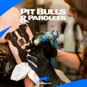 Pit Bulls and Parolees, Season 2 watch, hd download