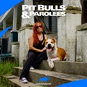 Pit Bulls and Parolees, Season 13 watch, hd download