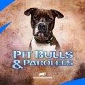 Pit Bulls and Parolees, Season 16 watch, hd download