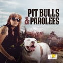 Pit Bulls and Parolees, Season 11 watch, hd download
