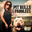Pit Bulls and Parolees, Season 10 watch, hd download
