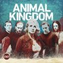 Animal Kingdom, Seasons 1-4 watch, hd download