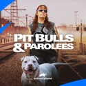 Pit Bulls and Parolees, Season 17 watch, hd download