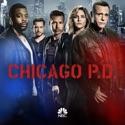 Chicago PD, Season 4 watch, hd download