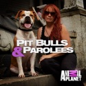 Pit Bulls and Parolees, Season 9 watch, hd download