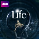 Life reviews, watch and download