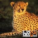 Episode 1 - Big Cat Diary from Big Cat Diary, Series 1
