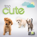 Too Cute!, Season 6 reviews, watch and download