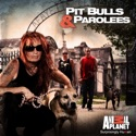 Pit Bulls and Parolees, Season 6 watch, hd download
