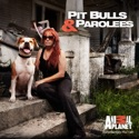 Pit Bulls and Parolees, Season 5 watch, hd download