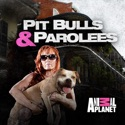 Pit Bulls and Parolees, Season 8 watch, hd download